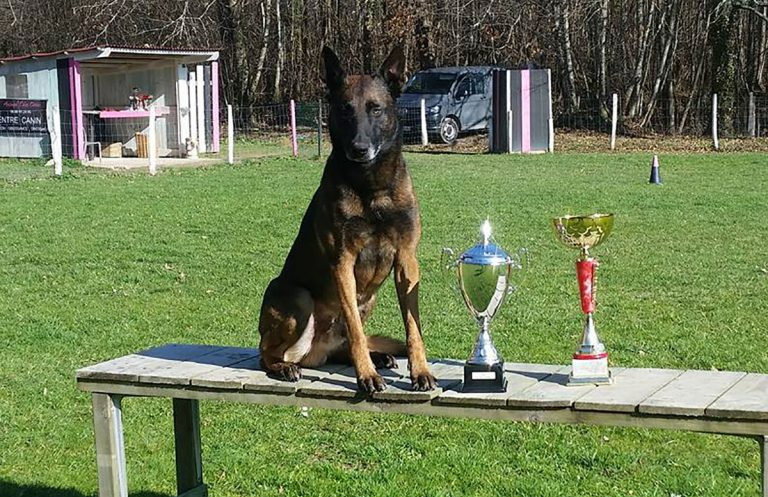 Animol Educ Canin