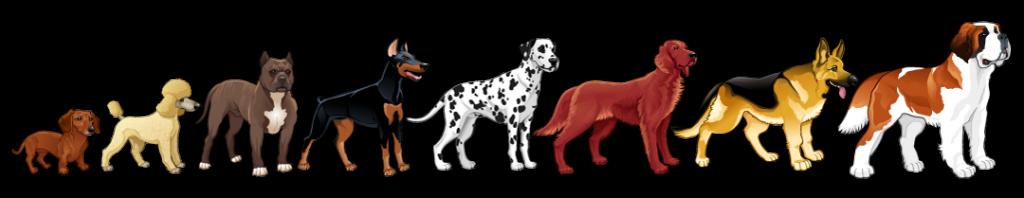 Animol Educ Canin, l'éducation canine
